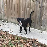 Adopt A Pet :: Elliot - Baton Rouge, LA
