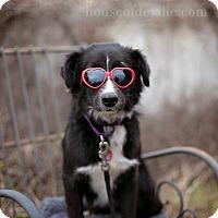 Adopt A Pet :: Danica - Natchitoches, LA