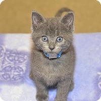Adopt A Pet :: Daniel - Medina, OH