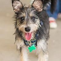 Adopt A Pet :: Gaston - Santa Fe, TX