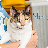 Adopt A Pet :: Shenzi - Somerset, PA