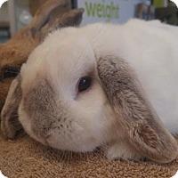 Adopt A Pet :: Appy - Los Angeles, CA