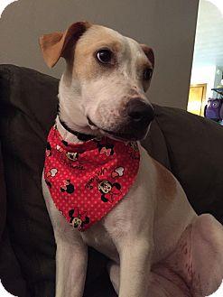 Labrador Retriever/Retriever (Unknown Type) Mix Dog for adoption in LaGrange, Kentucky - LOUISA MAY