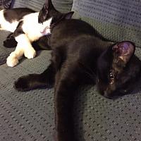 Adopt A Pet :: ZOE - Brea, CA