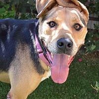 Adopt A Pet :: Mandie - Los Angeles, CA