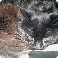 Adopt A Pet :: Buffington - Sanford, ME