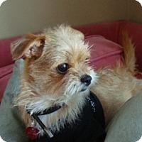 Adopt A Pet :: LOLA - ADOPTION PENDING - Los Angeles, CA