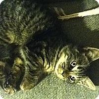 Adopt A Pet :: Braden - Portland, ME