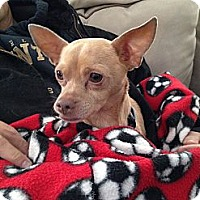 Adopt A Pet :: Chico - Marlton, NJ
