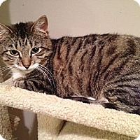 Adopt A Pet :: Azalea - East Hanover, NJ