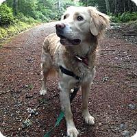 Adopt A Pet :: *TOBY* - Kingston, WA