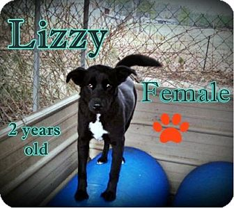 Australian Shepherd/Border Collie Mix Dog for adoption in Boaz, Alabama - Lizzie