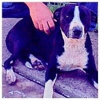 Adopt A Pet :: Daisy - Scottsdale, AZ