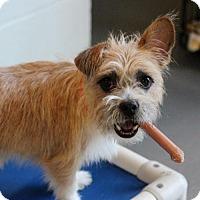 Adopt A Pet :: Nessy - Atlanta, GA