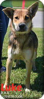 German Shepherd Dog Mix Dog for adoption in Beaumont, Texas - Luke