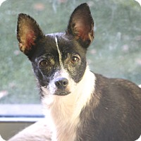 Adopt A Pet :: Zaza - MEET ME - Woonsocket, RI