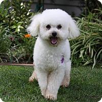 Adopt A Pet :: COCONUT - Newport Beach, CA