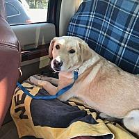 Adopt A Pet :: Summer - Cambridge, ON