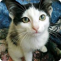 Adopt A Pet :: Banksy - Homewood, AL