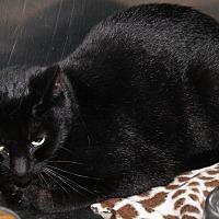 Adopt A Pet :: Izzy (Spayed) - Marietta, OH