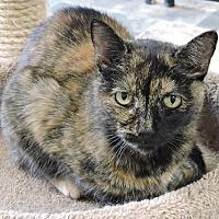 Adopt A Pet :: Trisha - Massapequa, NY