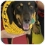 Photo 3 - Hound (Unknown Type)/Dachshund Mix Dog for adoption in Huntingdon, Pennsylvania - Casey