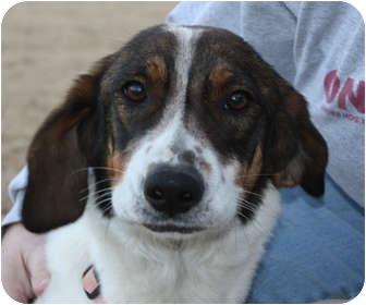 Beagle/Hound (Unknown Type) Mix Dog for adoption in Marion, Arkansas - Lexi