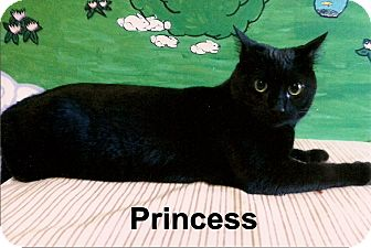 Domestic Shorthair Cat for adoption in Medway, Massachusetts - Princess