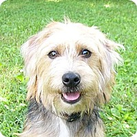 Adopt A Pet :: Winston - Mocksville, NC