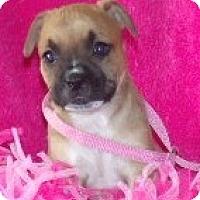 Adopt A Pet :: Rosie - Phillips, WI