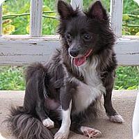 Adopt A Pet :: Megan - San Angelo, TX