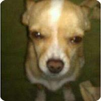 Adopt A Pet :: Atticus - 3 lbs cutie - Phoenix, AZ