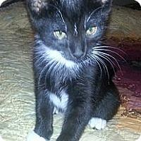 Adopt A Pet :: Jammer - Monroe, GA