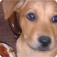 Adopt A Pet :: Graham - Fresno, CA