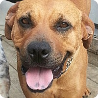 Adopt A Pet :: Sadie*ADOPTED!* - Chicago, IL