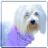 Adopt A Pet :: Haley what a beauty - Sacramento, CA