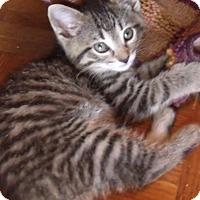 Adopt A Pet :: WILLIAM - Acme, PA