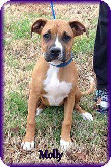 Boxer Mix Dog for adoption in Lincoln, Nebraska - MOLLY