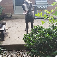 Adopt A Pet :: Roscoe - Stevens Point, WI