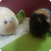 Adopt A Pet :: Pearl & Pixie - San Antonio, TX
