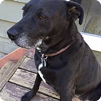 Adopt A Pet :: Sammie (Courtesy listing) - Gig Harbor, WA