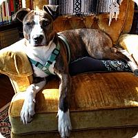 Adopt A Pet :: Button - Nashville, TN