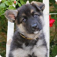 Adopt A Pet :: Daisy von Sequoia - Thousand Oaks, CA