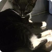 Adopt A Pet :: Rebekah - Byron Center, MI
