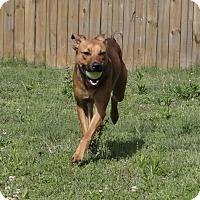 Adopt A Pet :: Carter - PORTLAND, ME