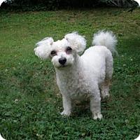 Adopt A Pet :: KATIE GRACE - Washington, DC