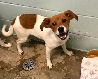 Mixed Breed (Medium) Mix Dog for adoption in Florence, Alabama - Trevor