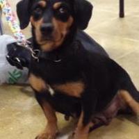 Adopt A Pet :: Nyla - West Palm Beach, FL