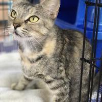 Adopt A Pet :: Georgia May - Warren, MI