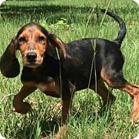 Adopt A Pet :: Kennedy - Sylacauga, AL